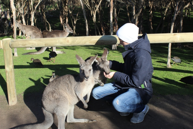 Fredrik and kangaroos